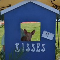 kissing-booth1