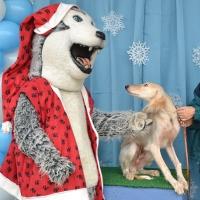 santa-paws9