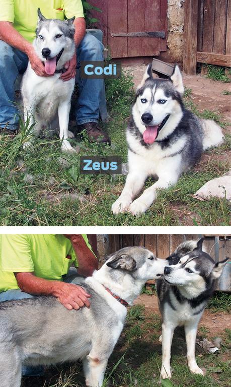 codi-zeus_update